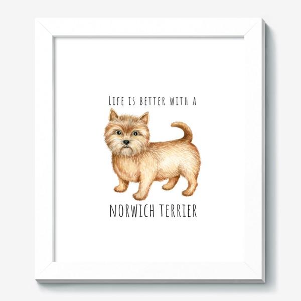 Картина «Норвич терьер, смешная собака»