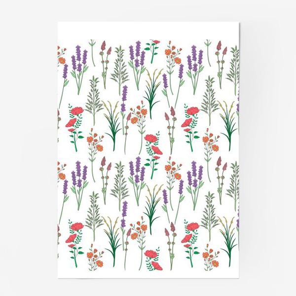 Постер «Дикие травы и цветы, паттерн»
