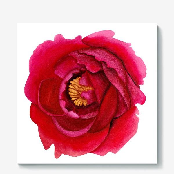 Холст «Темно-розовый пион»