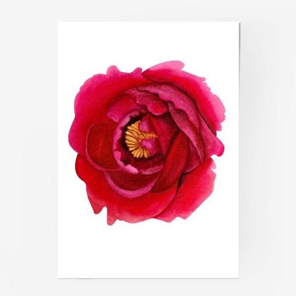 Постер «Темно-розовый пион»