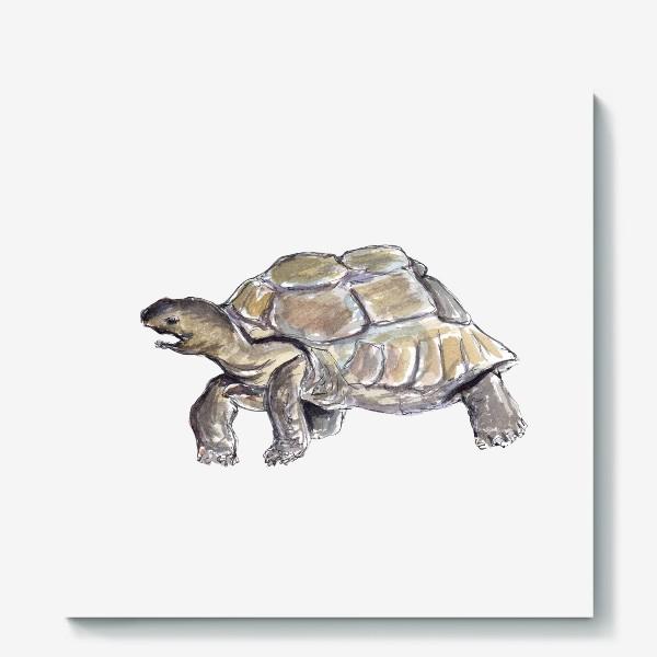 Холст «Черепаха. Нас не догонишь...»