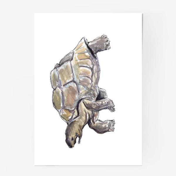 Постер «Черепаха. Нас не догонишь...»