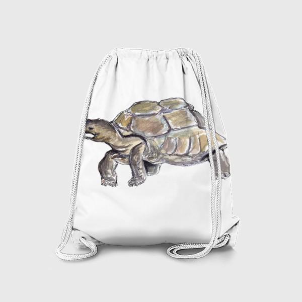 Рюкзак «Черепаха. Нас не догонишь...»