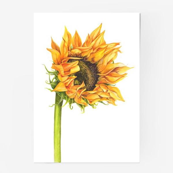 Постер «Цветок подсолнуха»