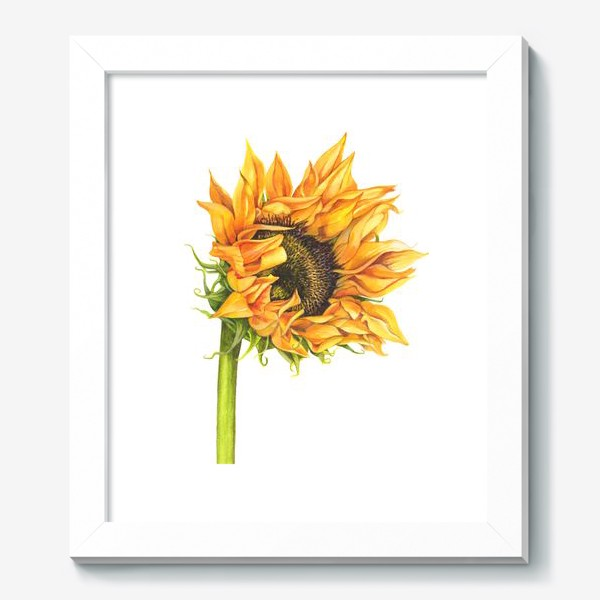 Картина «Цветок подсолнуха»