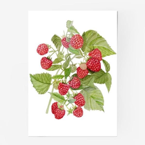 Постер «Watercolor illustration of red raspberry Bush.»