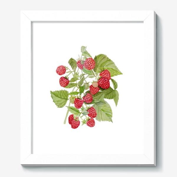 Картина «Watercolor illustration of red raspberry Bush.»