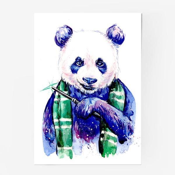 Постер «панда Драко»