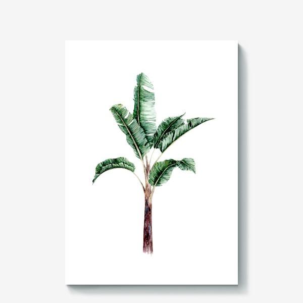 Холст «Тропики банановое дерево»