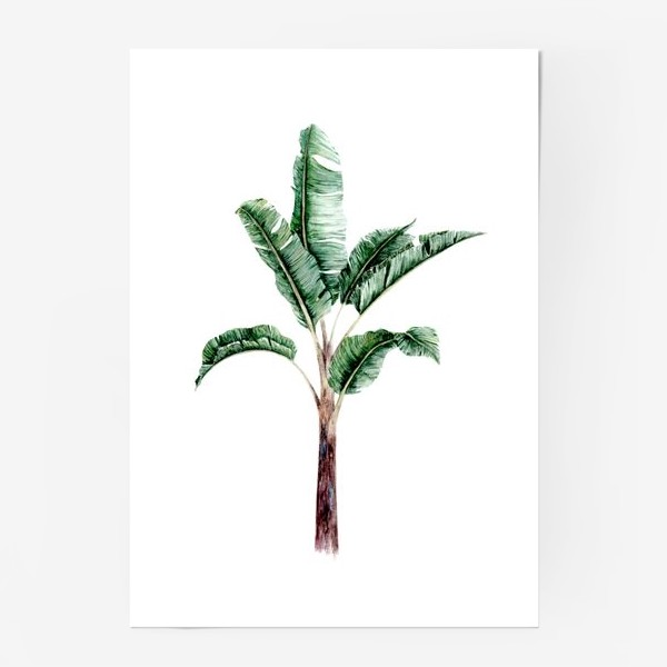 Постер «Тропики банановое дерево»
