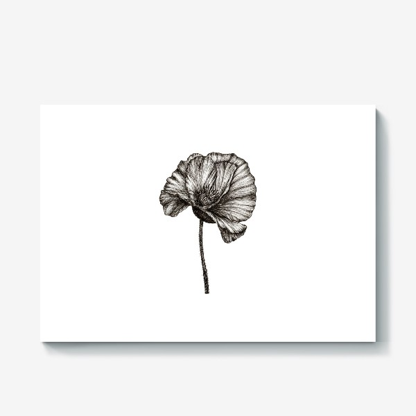 Холст «Цветок мака графика»