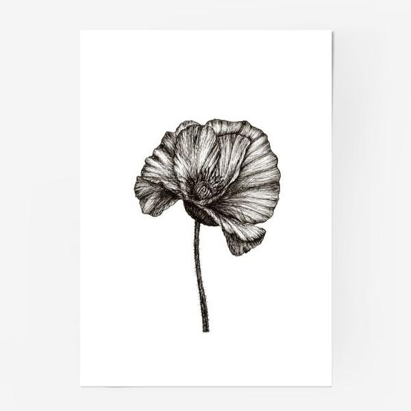 Постер «Цветок мака графика»