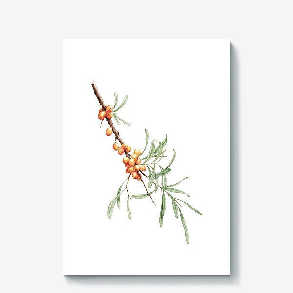 Холст «Ветка облепихи ботаническая иллюстрация»