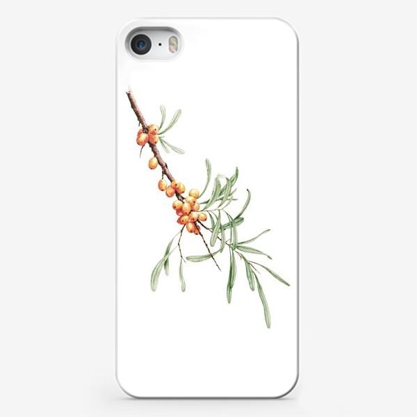 Чехол iPhone «Ветка облепихи ботаническая иллюстрация»
