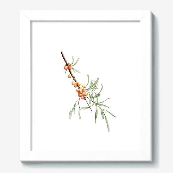 Картина «Ветка облепихи ботаническая иллюстрация»