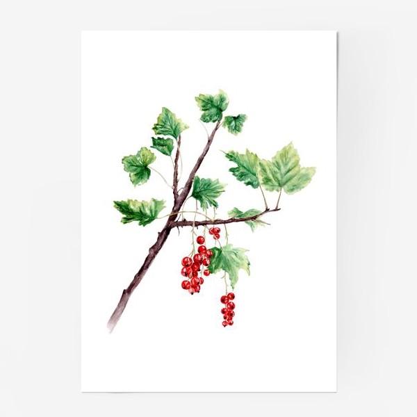 Постер «Ветка смородины ботаническая иллюстрация»
