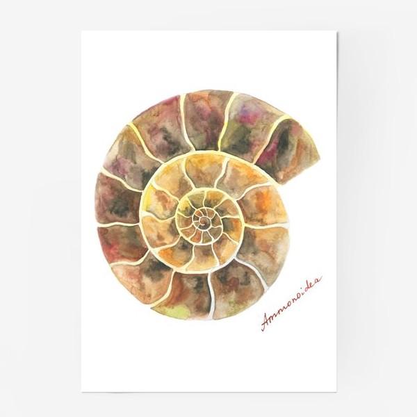 Постер «Аммонит, доисторическая улитка»
