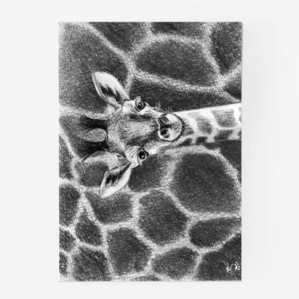 Постер «Жираф черно-белый»