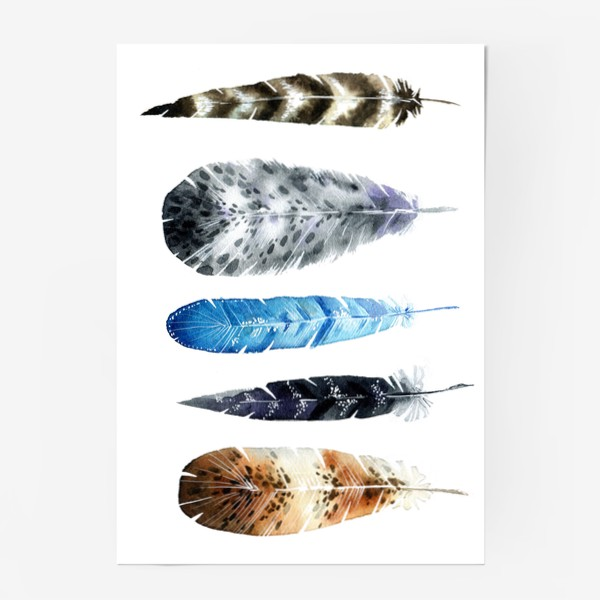 Постер «Пять красивых перьев»