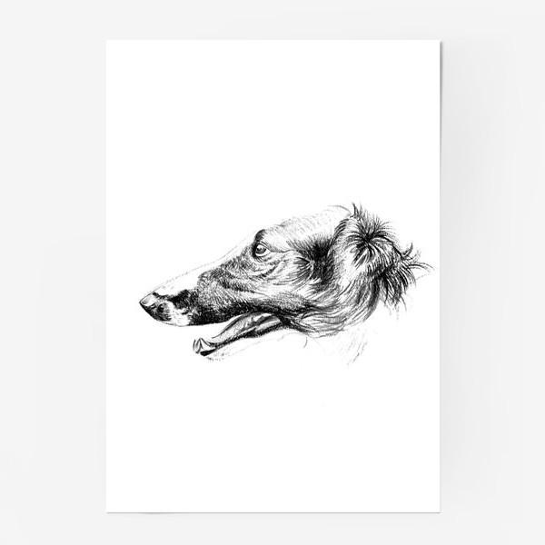 Постер «Портрет собаки»
