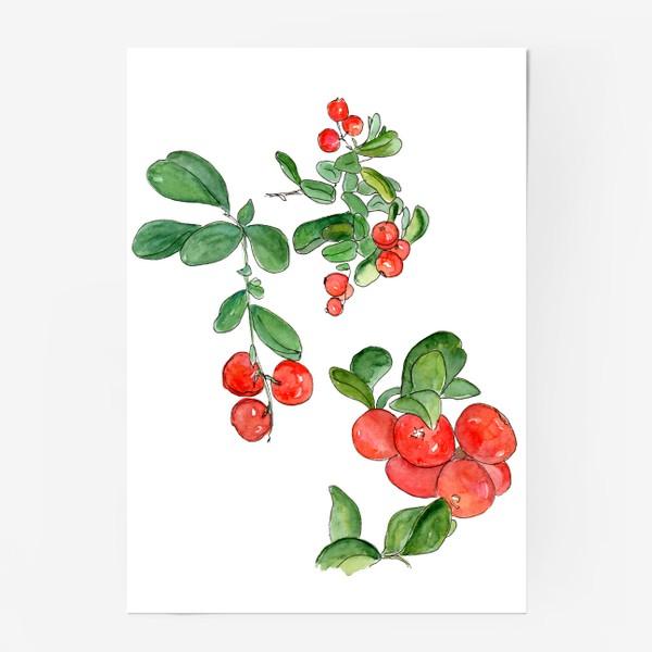 Постер «Брусника - богатство осеннего леса»