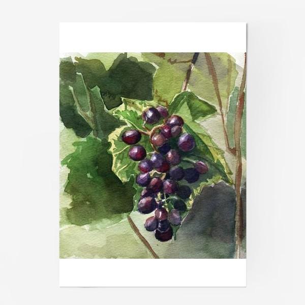 Постер «Виноград»