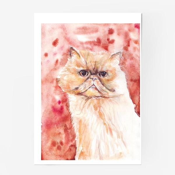 Постер «Персидский кот»