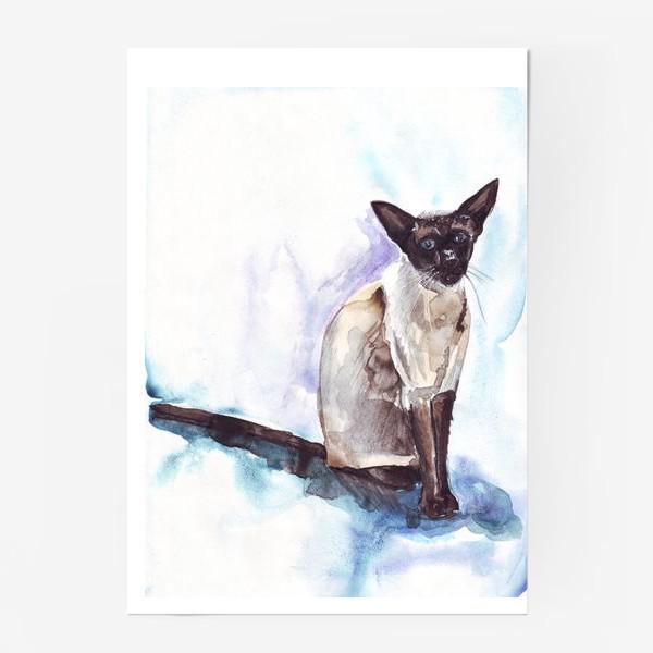 Постер «Сиамский кот на голубом фоне»