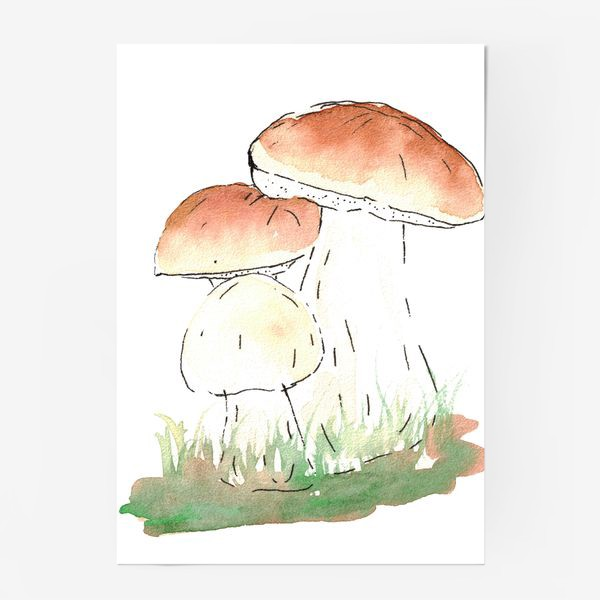 Постер «Porcini mushrooms»