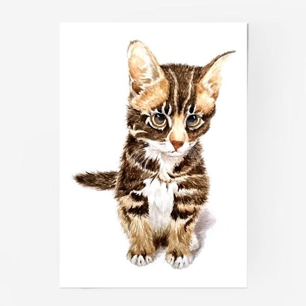 Постер «Милый котенок сидит»