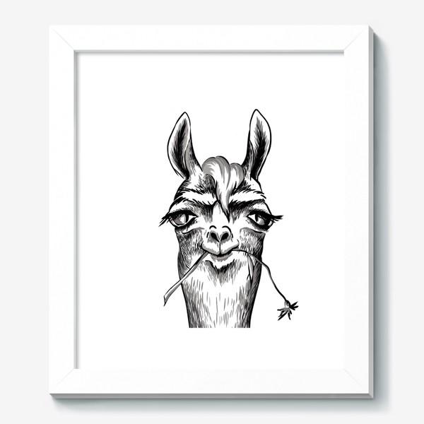 Картина «Портрет ламы»