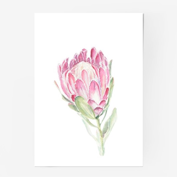 Постер «Протея. Акварельный цветок»