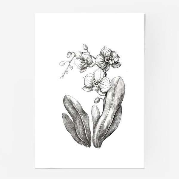 Постер «Орхидея»