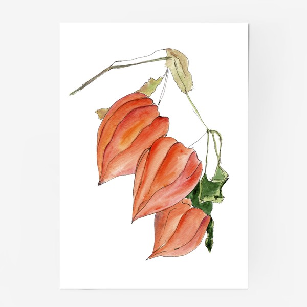 Постер «Физалис. Краски осени.»