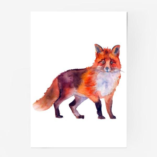 Постер «рыжая лиса»