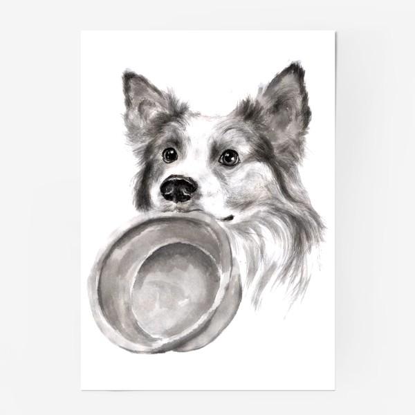 Постер «Портрет собака колли с миской»