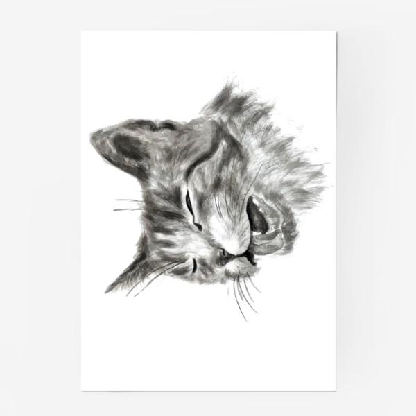 Постер «портрет кошка чихает»