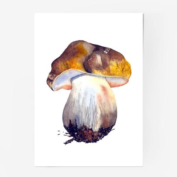 Постер «белый гриб»
