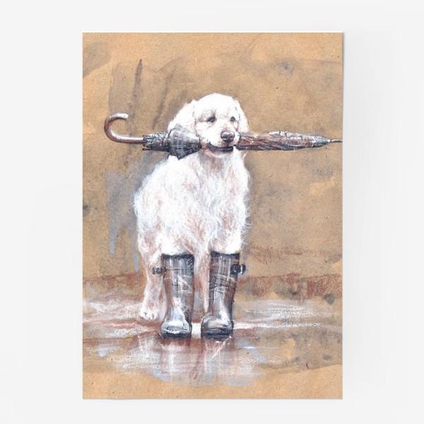 Постер «Товарищ лабрадор, белый, собака, иллюстрация»