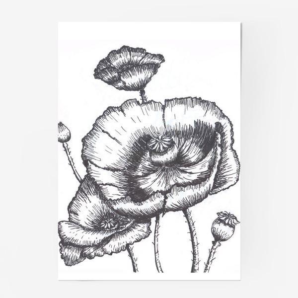 Постер «Маки (черно-белая графика)»