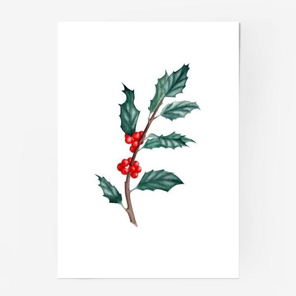 Постер «Ветка остролиста ботаническая иллюстрация акварель»