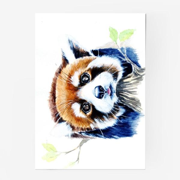 Постер «Рыжая панда»