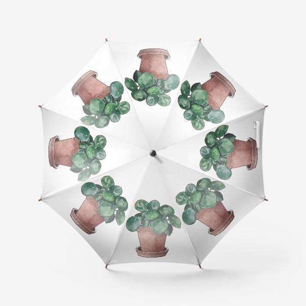 Зонт «Цветок в горшке. Пилея»