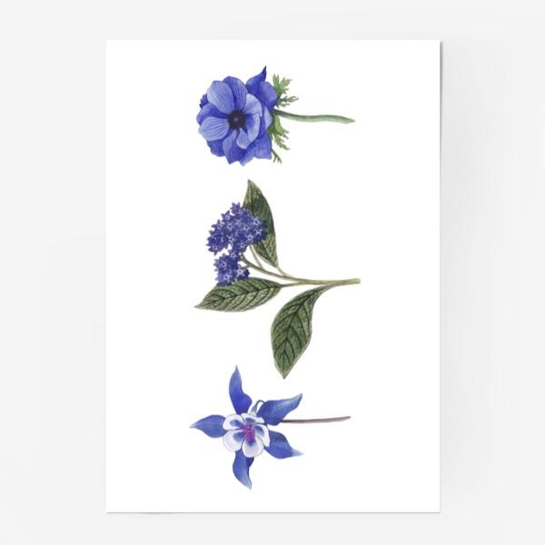 Постер «Синие цветы. Ботаника»